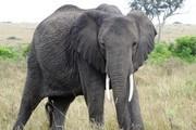 Safari i Tanzania med avslutning på paradisön Zanzibar